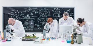 Badacze pod mikroskop analizą zdjęcie royalty free