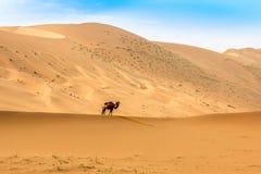 Badain Jaran Desert con los sandunes y el camello imagen de archivo
