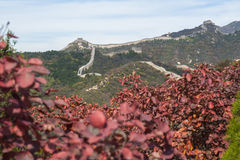 Badaling Great Wall in autumn. Photoed in Beijing Royalty Free Stock Photo