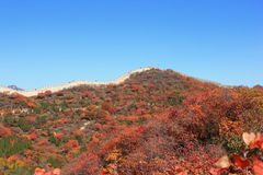 Badaling national forest park Royalty Free Stock Image