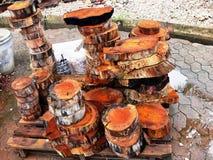 badanie drewna Obraz Stock
