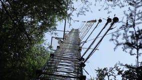 Badanie naukowe w świerkowych lasach używać wir kowariantności technikę zdjęcie wideo