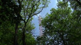 Badanie naukowe w floodplain lesie używać wir kowariantności technikę zdjęcie wideo