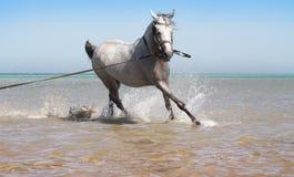 badar hästhavet Royaltyfria Foton