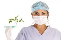 badawczy Gmo warzywo Fotografia Stock