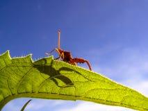 Badbug. On a sunflower leaf Royalty Free Stock Image