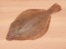 Klickfisk arkivbild