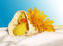 Badeendje met bloem in washand. Yellow plastic bath duck with flower on a pillow Royalty Free Stock Image