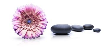 Badekurort-Blume und Steine lizenzfreie stockbilder