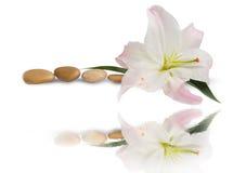 Badekurort Lilienblumen- und -massagesteine mit Wasserreflexionsisolat Lizenzfreies Stockfoto