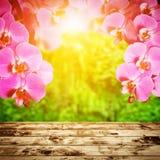 Badekurort, Zen, Wellnesszusammensetzung. Orchideenblumen Stockfotografie