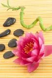 Badekurortaufbau mit rosafarbener Wasserlilie Lizenzfreies Stockbild