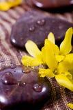 Badekurortbehandlung - Felsen und Blume Stockfotografie
