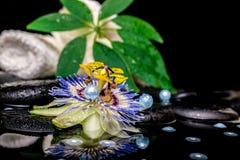 Badekurorteinstellung der Passionsblumenblume, weiße Staplungstücher, Blatt sie Stockfotos