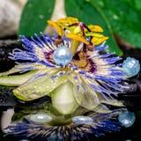 Badekurorteinstellung der Passionsblumenblume, weiße Staplungstücher, Blatt sie Stockfotografie