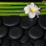 Badekurorteinstellung von Zenbasaltsteinen, weiße Blume Frangipani Lizenzfreie Stockfotos