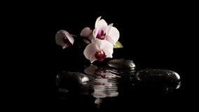 Badekurorthintergrund mit Orchideen auf Massagesteinen Stockbild