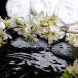 Badekurorthintergrund von Zensteinen, blühende Zweigpflaume, weiße Tücher w Stockbilder