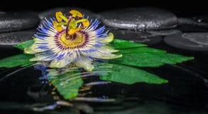 Badekurortkonzept der Passionsblumenblume auf grünem Blatt, Zenbasaltstein Lizenzfreies Stockfoto