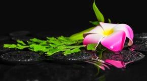 Badekurortkonzept der Plumeriablume, grüner Niederlassung Adiantumsfarn mit Stockbilder
