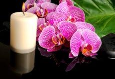 Badekurortkonzept des blühenden Zweigs der abgestreiften violetten Orchidee Stockfotos