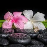Badekurortkonzept des weißen, rosa Hibiscus blühen und natürlicher Bambus Lizenzfreie Stockfotografie