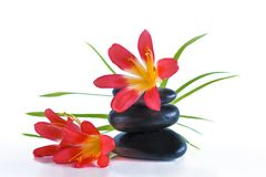 Badekurortkonzept mit schwarzen Massagesteinen und roten Blumen stockbilder