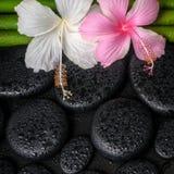 Badekurortkonzept von Zenbasaltsteinen, Weiß, rosa Hibiscus blühen Stockfotos