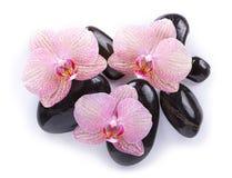 Badekurortsteine auf Weiß mit Orchideen Lizenzfreie Stockbilder