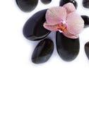 Badekurortsteine mit Orchidee auf Weiß Stockfotografie