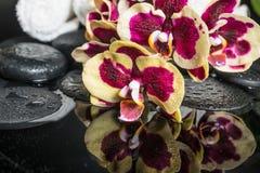 Badekurortsteine mit Tropfen und dem blühenden Zweig der Orchidee (Phalaenopsis Stockfotografie