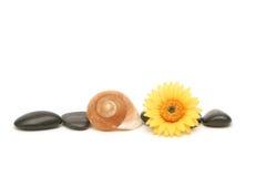 Badekurortsteine, -Seashell und -gänseblümchen stockfotos