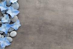 Badekurortsteine und -blumen auf grauem Hintergrund Lizenzfreie Stockfotos