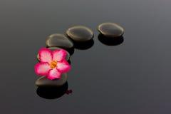 Badekurortsteine und Blumen von Adenium. Lizenzfreies Stockbild