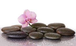 Badekurortsteine und Orchideenblume und schwarze Steine Lizenzfreies Stockfoto
