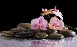 Badekurortsteine und Orchideenblumen mit Reflexion Stockfotos
