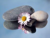 Badekurortsteine und weiße Blume Stockbilder
