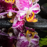 Badekurortstillleben der lila Orchidee der schönen Spitzes (Phalaenopsis), GR Stockbilder