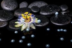 Badekurortstillleben der Passionsblumenblume auf Zenbasaltsteinen mit Dr. Lizenzfreies Stockfoto