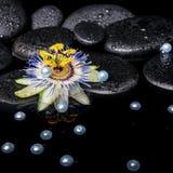 Badekurortstillleben der Passionsblumenblume auf Zenbasaltsteinen mit Dr. Stockbild