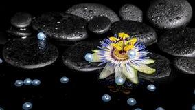 Badekurortstillleben der Passionsblumenblume auf Zenbasaltsteinen mit Dr. Lizenzfreie Stockfotos