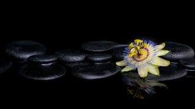 Badekurortstillleben der Passionsblumenblume auf Zensteinen Stockfotografie