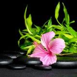 Badekurortstillleben des rosa Hibiscus blühen und die Zweige, die auf Zen b Bambus sind Lizenzfreie Stockfotografie
