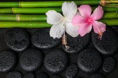 Badekurortstillleben von weißen, rosa Hibiscusblumen und von natürlichem bambo Lizenzfreies Stockfoto