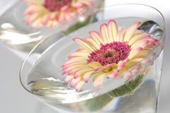 Badekurortszene mit Blumen Lizenzfreies Stockfoto