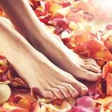 Badekurortzusammensetzung von weiblichen Füßen und von Blumenblättern stockbild
