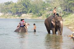 Baden auf Elefanten, Nepal, Nationalpark Chitwan, November lizenzfreie stockfotografie