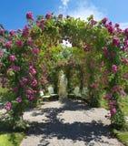 _Baden Baden de Rose Garden, Alemanha Imagem de Stock Royalty Free