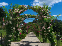_Baden Baden de Rose Garden, Alemanha Fotos de Stock Royalty Free