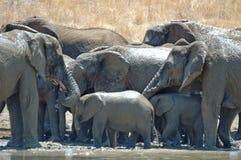 Baden der Elefanten. lizenzfreies stockbild